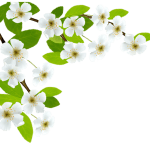 Flores – Flor Bonita Branca 2 PNG