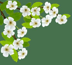Flores - Flor Bonita Branca 2
