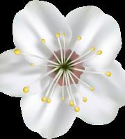 Flores - Flor Bonita Branca 4
