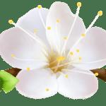 Flores – Flor Bonita Branca PNG