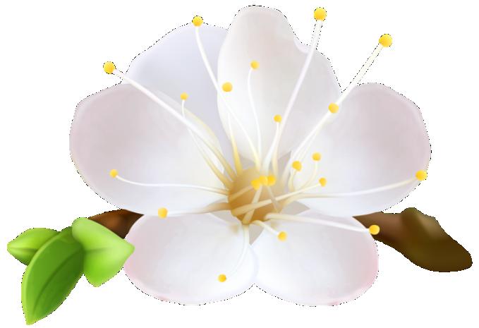 Flor Bonita Branca PNG Imagens E Moldes.com.br