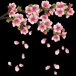 Flores – Flor Bonita PNG