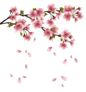 Flores - Flor Bonita PNG