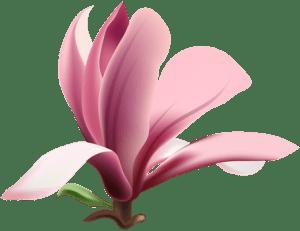 Flores - Flor Bonita Rosa 11