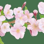 Flores – Flor Bonita Rosa 12 PNG