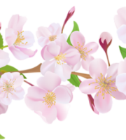 Flores - Flor Bonita Rosa 12