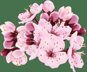 Flores - Flor Bonita Rosa 13