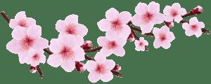 Flores - Flor Bonita Rosa 14