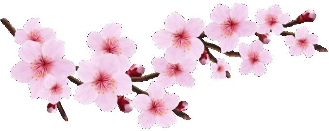 Flores Flor Bonita Rosa 14 Png Imagens E Moldescombr