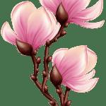 Flores – Flor Bonita Rosa 15 PNG