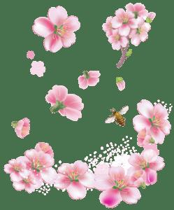 Flores - Flor Bonita Rosa 16