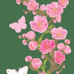 Flores – Flor Bonita Rosa 18 PNG