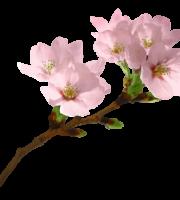 Flores - Flor Bonita Rosa 19