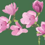 Flores – Flor Bonita Rosa 2 PNG