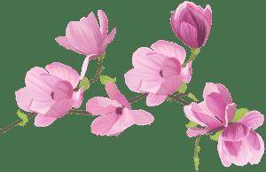 Flores - Flor Bonita Rosa 2