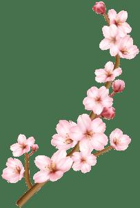 Flores - Flor Bonita Rosa 4