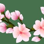Flores – Flor Bonita Rosa 5 PNG