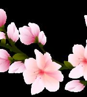 Flores - Flor Bonita Rosa 5