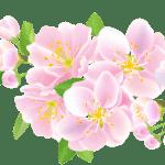 Flores – Flor Bonita Rosa 6 PNG