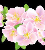 Flores - Flor Bonita Rosa 6