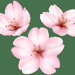 Flores – Flor Bonita Rosa 7 PNG