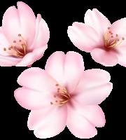 Flores - Flor Bonita Rosa 7