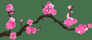 Flores - Flor Bonita Rosa 8
