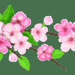 Flores – Flor Bonita Rosa 9 PNG