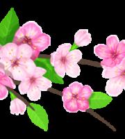 Flores - Flor Bonita Rosa 9