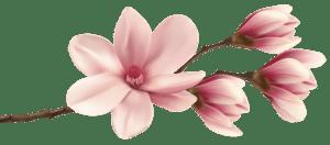 Flores - Flor Bonita Rosa Champagne 2