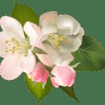 Flores – Flor Bonita Rosa Champagne 3 PNG