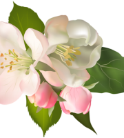 Flores - Flor Bonita Rosa Champagne 3