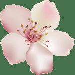 Flores – Flor Bonita Rosa Champagne PNG