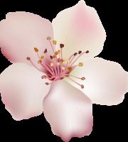Flores - Flor Bonita Rosa Champagne