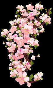 Flores - Flor Bonita Rosa