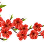 Flores – Flor Bonita Vermelha 2 PNG