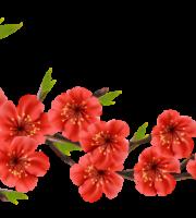 Flores - Flor Bonita Vermelha 2