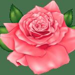 Flores – Rosa Vermelha 3 PNG