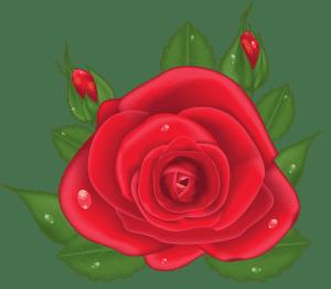 Flores - Rosa Vermelha 6