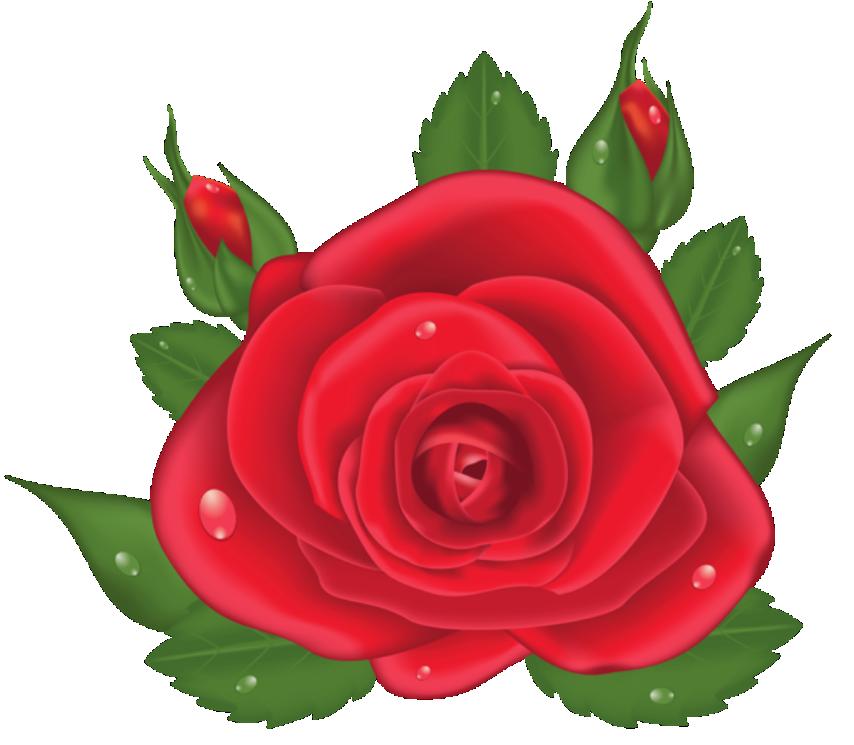 Flores Rosa Vermelha 6 Png Imagens E Moldes Com Br
