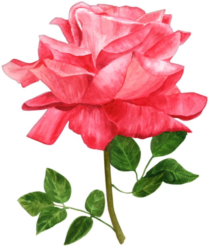 Flores Rosa Vermelha Png Imagens E Moldescombr Imagens Gratuitas