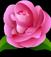 Flores - Rosa cor de Rosa 2