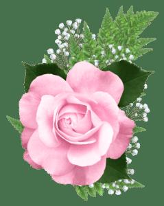 Flores - Rosa cor de Rosa 4