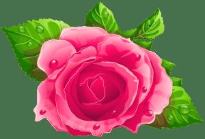 Flores - Rosa cor de Rosa 5