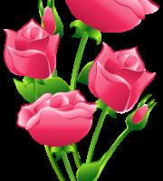Flores - Rosa cor de Rosa 6
