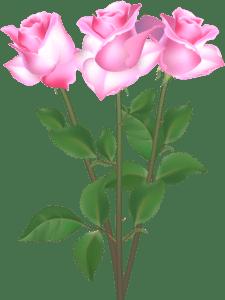 Flores - Rosa cor de Rosa