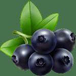 Imagem de Frutas – Jabuticaba 2 PNG