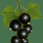 Imagem de Frutas – Jabuticaba 3 PNG