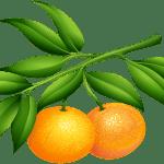 Imagem de Frutas – Laranja PNG