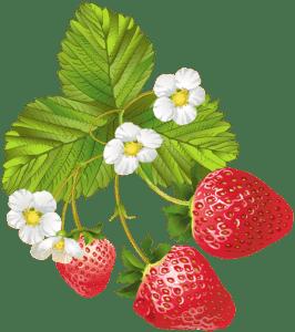 Imagem de Frutas - Morango 9 PNG